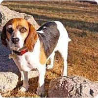 Adopt A Pet :: Chelsea Morning - Phoenix, AZ