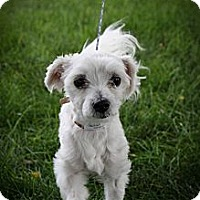 Adopt A Pet :: Albert Camus - Broomfield, CO