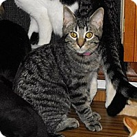 Adopt A Pet :: Estelle - Grand Rapids, MI