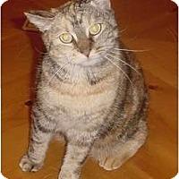 Adopt A Pet :: Juniper - Franklin, NC