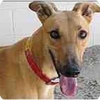 Adopt A Pet :: Willie - St Petersburg, FL