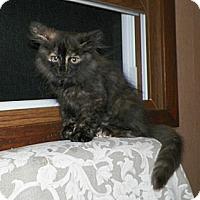 Adopt A Pet :: Diana - Dover, OH