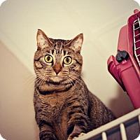 Adopt A Pet :: Rachel - Oceanside, CA