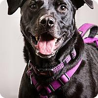 Adopt A Pet :: Jake- DRD graduate - Owensboro, KY
