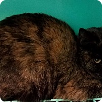 Adopt A Pet :: Patch - California City, CA