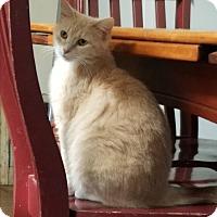 Adopt A Pet :: Apple - Marietta, GA