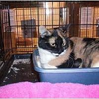 Adopt A Pet :: Theresa - Chino, CA