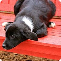 Adopt A Pet :: Noelle - E. Wenatchee, WA