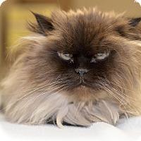 Adopt A Pet :: Chatham - Medina, OH