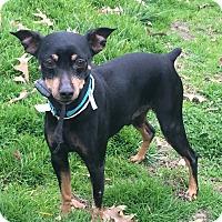Adopt A Pet :: Andre - Va Beach, VA