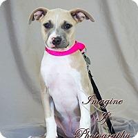 Adopt A Pet :: Maureen - Newcastle, OK