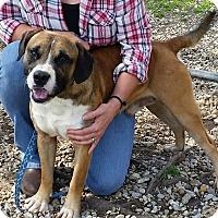 Adopt A Pet :: Riddick - SOUTHINGTON, CT