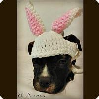 Adopt A Pet :: Charlie - Des Moines, IA
