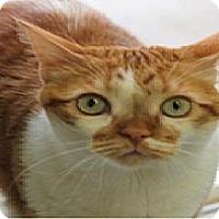 Adopt A Pet :: Kona A. - El Cajon, CA