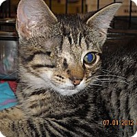 Adopt A Pet :: Clancy - Riverside, RI