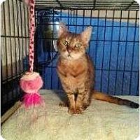 Adopt A Pet :: Bubbles - Lantana, FL