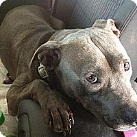Adopt A Pet :: Smarty - Byron Center, MI