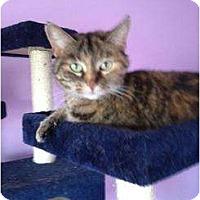 Adopt A Pet :: Chloe - Mobile, AL