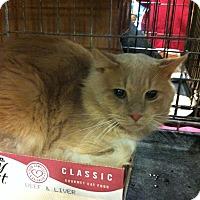Adopt A Pet :: Myles - Pittstown, NJ