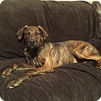 Adopt A Pet :: Remi - Richmond, VA