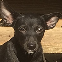 Adopt A Pet :: Rico - Plainfield, CT