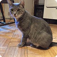 Adopt A Pet :: Etta - New  York City, NY
