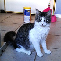 Adopt A Pet :: Zeus - Riverside, CA