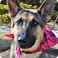 Adopt A Pet :: Gwen - Gretna, NE