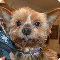 Adopt A Pet :: Baley - Prole, IA