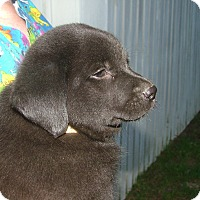Adopt A Pet :: Jersey - Westport, CT