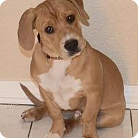 Adopt A Pet :: Boba - Palo Alto, CA