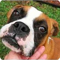 Adopt A Pet :: Tebow - Albany, GA