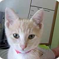 Adopt A Pet :: Shiloh - Shelton, WA