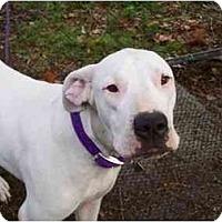 Adopt A Pet :: Wendy - Sierra Vista, AZ