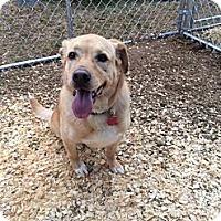 Adopt A Pet :: Blondie - Fort Valley, GA
