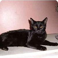 Adopt A Pet :: Skye - Bedford, MA