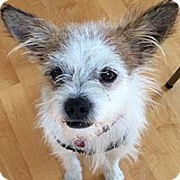 Adopt A Pet :: RICKY - Mission Viejo, CA