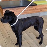 Adopt A Pet :: DEANA - Oswego, IL