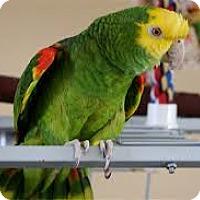 Adopt A Pet :: Henry - Independence, KY