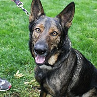 German Shepherd Dog Dog for adoption in New Monmouth, New Jersey - Trick