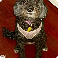 Adopt A Pet :: ZOEY- call 352-650-6436 - Brooksville, FL