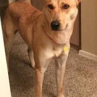 Adopt A Pet :: Jenny - Scottsdale, AZ