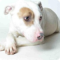 Adopt A Pet :: GOOSIE - Ukiah, CA