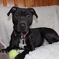 Adopt A Pet :: Richie - Long Beach, NY