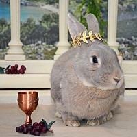 Adopt A Pet :: Gretl Von Trapp - Chicago, IL