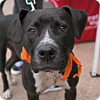 Adopt A Pet :: Parker - Sunnyvale, CA