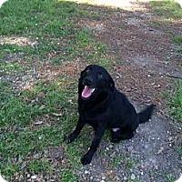 Adopt A Pet :: Cam - Baton Rouge, LA