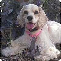 Adopt A Pet :: Libby - Sugarland, TX