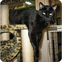 Adopt A Pet :: Max - Catasauqua, PA
