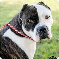Adopt A Pet :: Danie - El Campo, TX